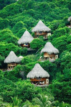 The hillside of Thailand.   I could imagine my boyfriend and I relaxing in one of those huts, just taking in the life around!