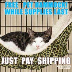 FREE Cat Hammock **Limited Quantities*** #Kaboomski