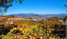 El Vale do Douro por Miguel Torga | Turismo en Portugal #douro #portugal #torga