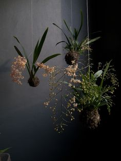 A trio of orchid string gardens is breathtaking.