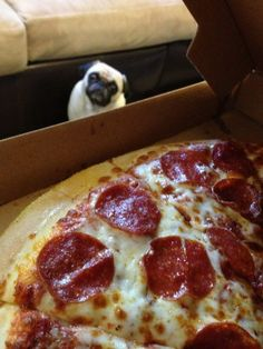 Pizza + Pug = the perfect combination;-)