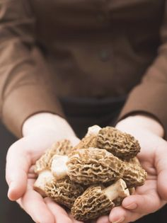 how to find morel mushrooms to cook