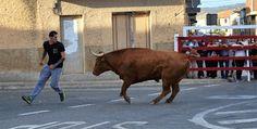 Santacara: Vacas Hermanos Arriazu Fiestas de la Juventud (5) Cow, Animals, January 20, Youth, Cows, Siblings, Fiestas, Animales, Animaux