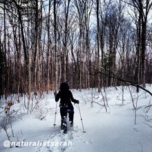 Snowshoeing in the Pocono Mountains