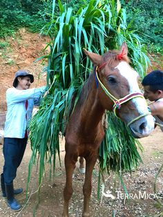 Small plot farmer in Mexico, Lao and son, packing crops on one of two horses TeraMica gifted to him to empower greater effectiveness on his farm.