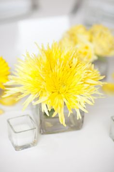 Yellow spider mum | Love them - like a firework in a bouquet!  A member of the chrysanthemum family which includes many flower forms. Stems may carry one flower (spidermum) or multiple blooms. Used as both cut flowers and blooming plants, they come in a wide variety of colors.
