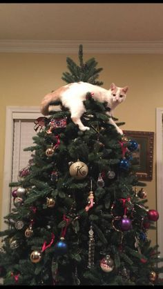 Image Result For Cat On Top Of Christmas Tree Christmas Cats Cat Christmas Tree Christmas Animals