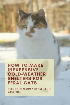 Winter shelters for feral cats. Shelters for feral cat colonies. Do-it-yourself cat shelters. How to keep feral cats warm. Caring for feral cat colonies. Feral Cat Shelter, Feral Cat House, Outdoor Cat Shelter, Outdoor Cats, Feral Cats, Cat Shelters For Winter, Igloo Dog House, Cat Health Care, Cat Nutrition