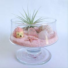 The Hedgehog Series: Pink Terrarium Kit by TerrariumKits on Etsy