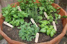 Carolina Charm: DIY Herb Garden