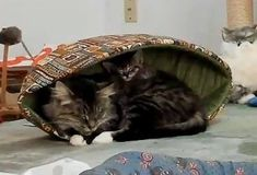 A two-year-old cat, Shelby, was found abandoned right before she gave birth to a litter of kittens. A Good Samaritan noticed her and provided her food while she took care of her kittens. When the kittens were older, they were trapped and taken to a local shelter. Purrfect Pals, a rescue group in Arl...