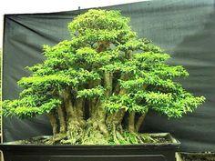 ᴥ♥A little #bonsai inspiration for today!☼♦       #BonsaiInspiration