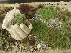 Hypertufa Hand in a bird cage planter...made out of surgical gloves filled with cement.