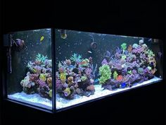 Reef Aquarium, Saltwater Aquarium, Carpenter Work, Have Some Fun, Secret Santa, More Fun, Singapore, Saltwater Tank, Secret Pal