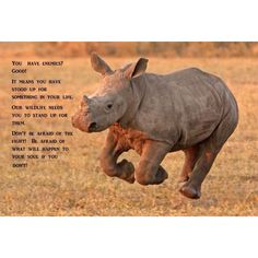 Courtesy of SanWild Wildlife Sanctuary. I love Rhinos!!!!