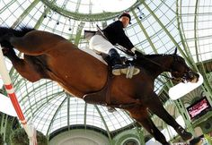 Fans of Horses's Photos in Horse jumping