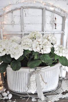 Shabby and white White Cottage, Shabby Chic Cottage, Vintage Shabby Chic, Shabby Chic Decor, White Flowers, Beautiful Flowers, White Hydrangeas, Hortensia Hydrangea, Vibeke Design