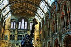 Twitter / Blanco_84: @NHM_London took some pictures ...