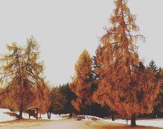 autunno!  #autunno #colors #lariciinfiamme #winteriscoming