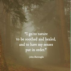 I go to nature to be soothed and healed, and to have my senses put in order ~ john burroughs nature quotes A True Sense of Order Great Quotes, Quotes To Live By, Inspirational Quotes, Awesome Quotes, Citation Nature, Beautiful Words, In This World, Wise Words, Decir No