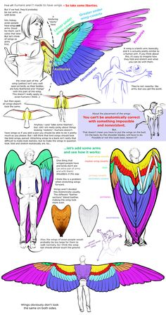 Points to guide you Develop Your own expertise of drawing tip character design Wing Anatomy, Anatomy Art, Wings Drawing, Drawing Base, Human Wings, Poses References, Digital Art Tutorial, Art Poses, Drawing Reference Poses