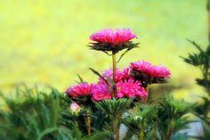 Các làng hoa miền Tây vào mùa Tết