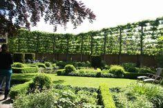Die 40 Besten Bilder Von Sichtschutz Planting Formal Gardens Und