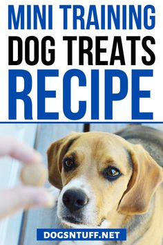 All fur parents want the best for their pooch. So, why not make your own DIY Dog Training Mini Treats? It is a quick and easy recipe, plus you can control the sizes and ingredients based on your dog's need. #DIYDogTreats #DogTreats #NoBake #DogTreatsHomeMade Diy Dog Treats, Homemade Dog Treats, Dog Treat Recipes, Small Dog Breeds, Small Dogs, Can Dogs Eat Bananas, Dog Facts, How To Make Diy, Dog Quotes