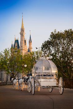 An enchanting ride in Cinderella's Coach to the beautiful East Plaza Garden in Disney's Magic Kingdom
