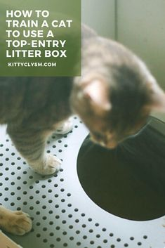 Top Entry Litter Box, Cat Feeder, Pet Care Tips, All About Cats, Cat Facts, How To Train Your, Cat Toys, Training Tips, Christmas Fun