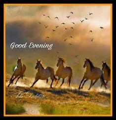 Good Evening Messages, Good Morning Wishes, English Language, Good Night, Camel, Poster, Ring, Nighty Night, English People