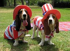 picture of 4th of july cats   4th-of-july-dog-costume.jpg
