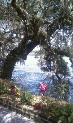 The gardens Magnolia Plantation S.C.  Beautiful!