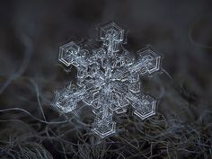 Amazing macro-photography of individual snowflakes ~ Guys The Road