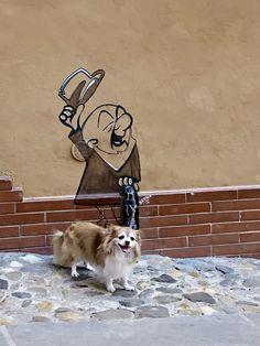 Husky, Dogs, Animals, Italia, Animais, Animales, Animaux, Pet Dogs, Doggies