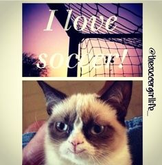 The only time you'll see grumpy cat happy | SOCCER