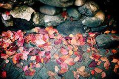 Red Leaves by Der Himmel über Bozen, via Flickr