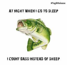 The most amazing smallmouth bass fishing! Bass Fishing Tips, Going Fishing, Carp Fishing, Saltwater Fishing, Kayak Fishing, Crappie Fishing, Ice Fishing, Fishing Basics, Fishing Tackle