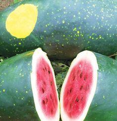 Watermelon Amish Moon and Stars D55103 (Red) 10 Organic Seeds by David's Garden Seeds David's Garden Seeds http://www.amazon.com/dp/B00T80ZQTI/ref=cm_sw_r_pi_dp_NOcmvb0R7JS4X