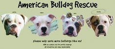 Please help save more bulldogs like us!  American Bulldog Rescue