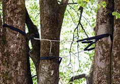 Tree Cabling and Bracing - Scapes Incorporatedhttp://www.scapesincorporated.com/services/tree-care-and-services/tree-cabling-and-bracing/