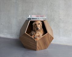 """Designers from Pup & Kit have made the """"The Missy Cave"""" with the ambition to allow your pet to get a comfy cave to rest. Its geometric shape also allows to use it as a side table. Pet Beds, Dog Bed, Dog Cave, Wire Haired Dachshund, Dog Furniture, Pet Home, Find Pets, Animal House, Dog Houses"""