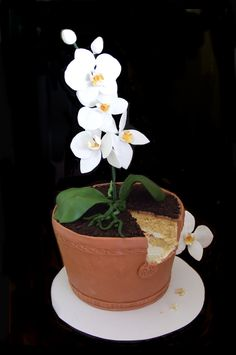 cake orchid