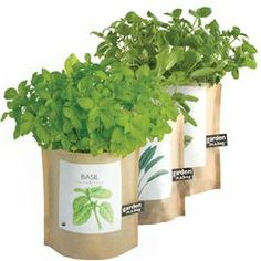 Garden-in-a-Bag Herb Collection Organic Basil (461300006), Garden Plants | Organic Herbs & Vegetables | Organic Plants & Herbs by Potting Shed Creations | Plants