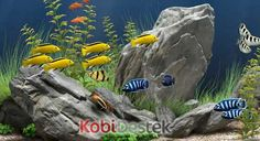 Evde akvaryum balığı üreticiliği | İş Fikirleri