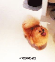 Hatchi (GIF) MUST SEE
