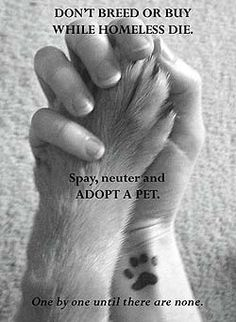 Don't Shop - Adopt