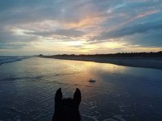 Inlet Point Plantation ~ https://m.facebook.com/inletpointplantationstables/ www.inletpointplantation.com ~ 843-249-2989 ~ @inletpointplantationstables #waitesisland  #beachrides #horses  #inletpoint  #inletpointplantation                   *{Every sunset brings a promise of a new dawn}*