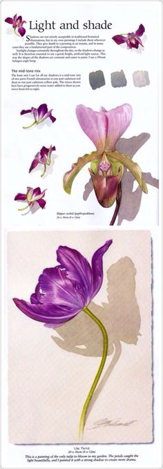 Watercolor Flower by Billy Showell. I have Billy's book on painting vegetables…