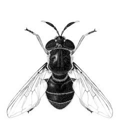 55 best insect illustrations images insect art beetles computer rh pinterest com
